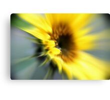 Sunflower rush Canvas Print