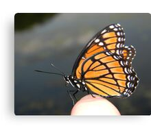 Monarch on my finger! Canvas Print