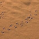 Lizard sand sketches by Owed To Nature