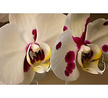 Orchids Close-up Photographic Print