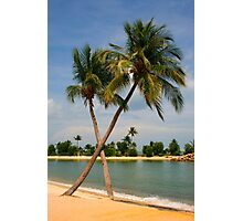 Palm Beach in the Sunshine Photographic Print