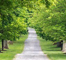 Tree Lined- Springton Manor by JLPPhotos