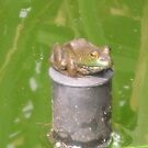 Who Put the Frog On the Pedistool? by teresa731