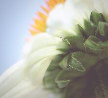 Floral Haze by AllyNCoxon