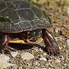 Ontario Turtle  by creativegenious