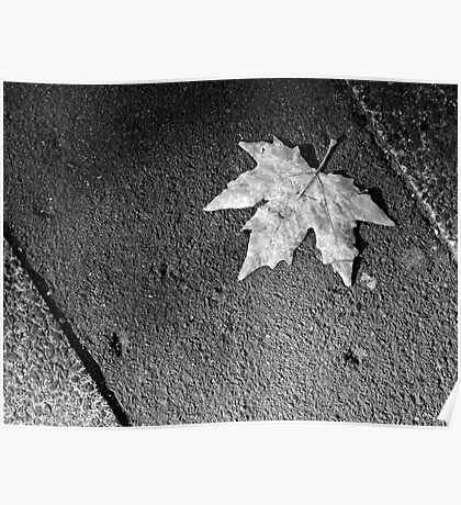 Leaf on a Sidewalk - black and white Poster