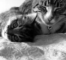 Kitty love by Elizabeth Rose Rawlings