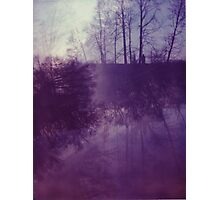 Dreamy Purple Trees Photographic Print