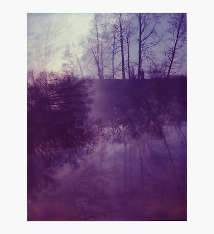 Dreamy Purple Trees Photographic Print
