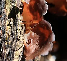 Mushroom Ears by Virginia N. Fred