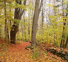 Fall in New England by muddylilac