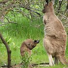 GROOMING LESSONS! for a Joey 'Arilka' Mount Pleasant, S.A. by Rita Blom
