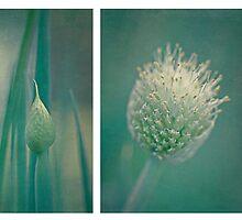 ~ spring onion ~ by Lorraine Creagh