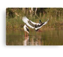 Clear The Pond Run Canvas Print