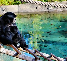 A Caring Moment - Columbus Zoo by JeniHolland