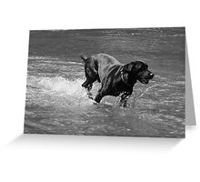 Water Dog - Little Miami River Greeting Card
