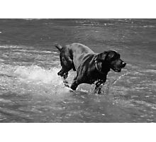 Water Dog - Little Miami River Photographic Print
