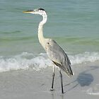 Great Blue Heron at the Beach by Caren