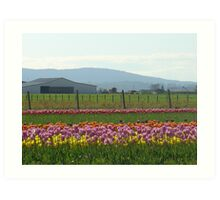 Skagit County Tulip Festival - Washington State Art Print