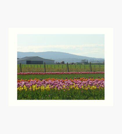 Skagit County Tulip Festival - Washington State Art Print