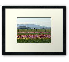Skagit County Tulip Festival - Washington State Framed Print