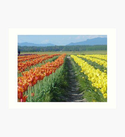 Tulip Explosion Art Print