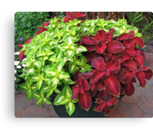 Pretty Bushes with Variegated Green and Crimson Leaves Canvas Print