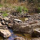Stony Creek, Anakie Gorge by Leanne Nelson