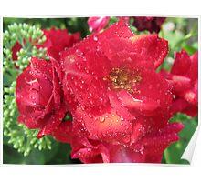 Golden Raindrop Rose Poster