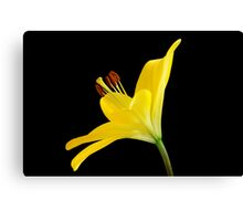 Yellow Lily #2 Canvas Print