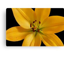 Yellow Lily #4 Canvas Print