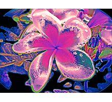 Neon Frangipani Photographic Print