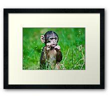 One step closer,,,,,,,,,,,,,  Eight week old Monkey Framed Print