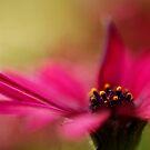 Pink and Dreamy by Joe Mortelliti