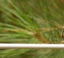 The Sherwood Bird On The Line by Katherine Hodgson