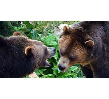 Grizzlies at Play Photographic Print