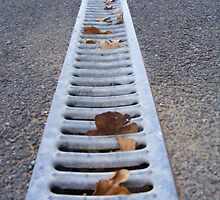 The Leaves In The Gutter by Katherine Hodgson