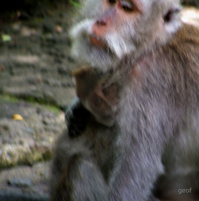 Adult and child, Monkey Forest, Ubud, Bali, sept 2010 by geof