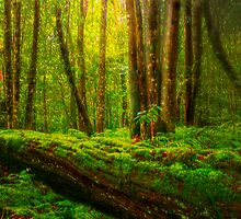 Rainforest - Sydney Royal National Park, NSW, Australia by Mark Richards