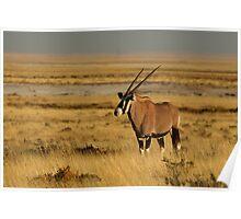 Oryx at dusk - Etosha Park, Namibia Poster
