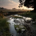 Daybreak in Bradgate Park by Andy Stafford