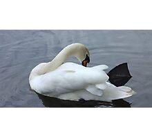 Swaning around - river swan Photographic Print