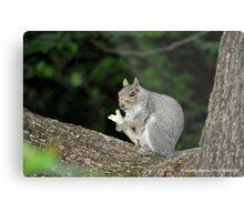 Successful Squirrel Metal Print