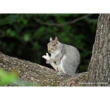 Successful Squirrel Photographic Print