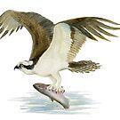 Osprey by Maureen Sparling