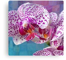 Phalaenopsis orchid with patchwork Canvas Print