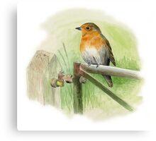 Robin on Rusty Gate Canvas Print