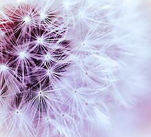 Pink Wishes by Debbra Obertanec
