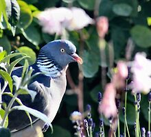 Pigeon in the plants by missmoneypenny