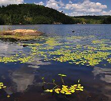 Bear Lake - Ontario, Canada. by Brendan Buckley